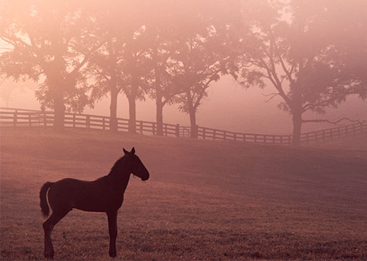 horse standing in foggy open field